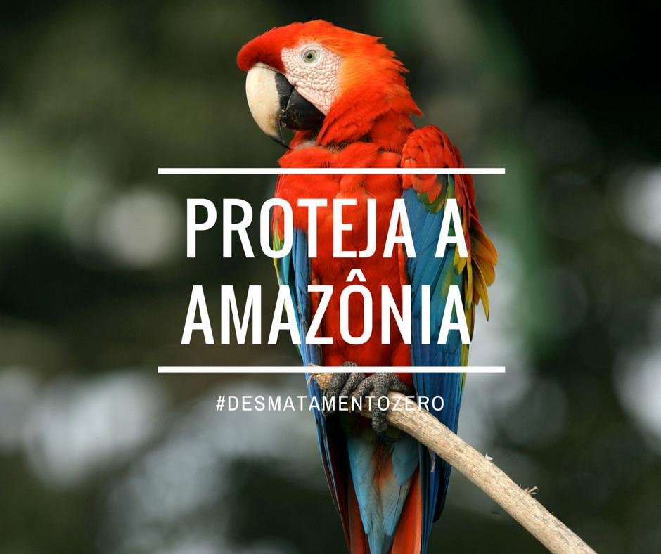 Amaznia1.3.png
